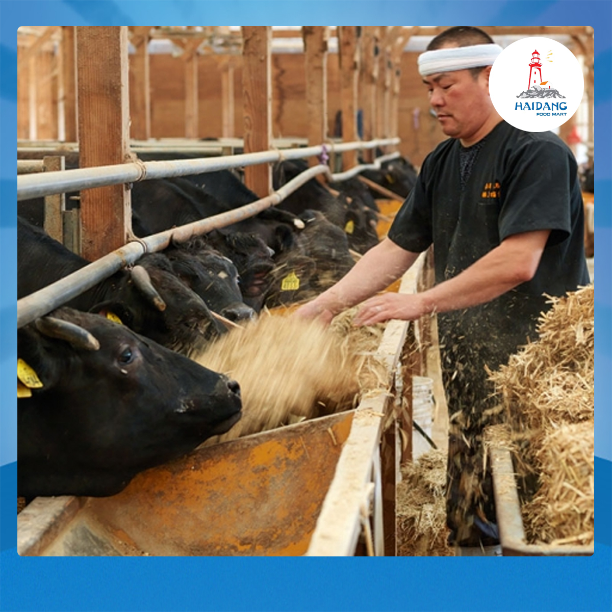 Quy trình chăm sóc bò đặc biệt